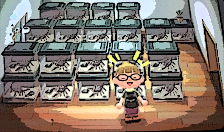 【あつ森】無人島でママさん大儲け!珍しい生き物でベルの効率的な稼ぎ方!